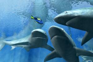 Мировые популяции акул и скатов сократились за полвека на 70 процентов