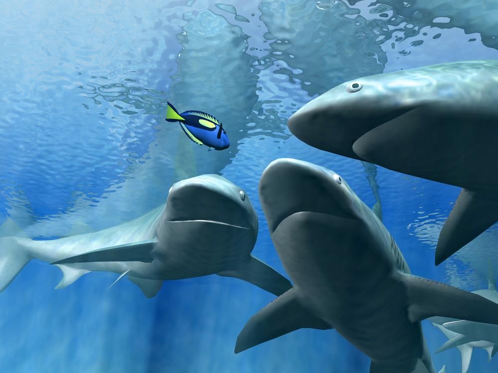 Мировые популяции акул и скатов сократились за полвека на 70 процентов.Вокруг Света. Украина