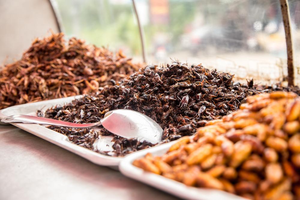 Названо первое насекомое, которое войдет в рацион европейцев.Вокруг Света. Украина