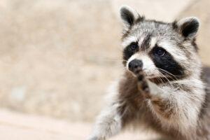 В Финляндии работают над вакциной от коронавируса для животных