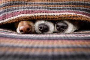 В Китае оцифруют носы всех собак