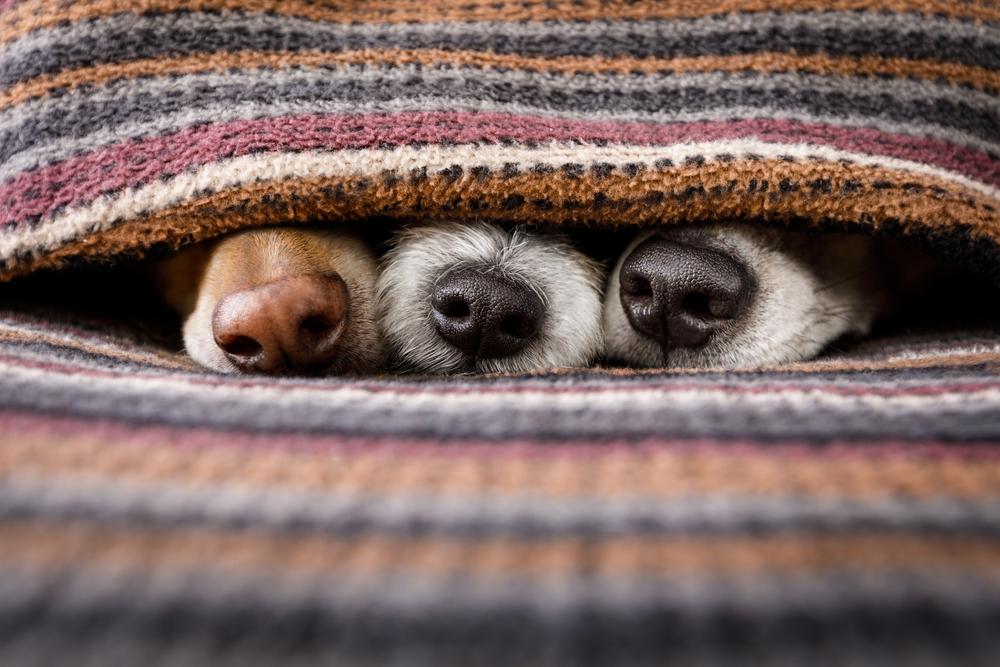 В Китае оцифруют носы всех собак.Вокруг Света. Украина