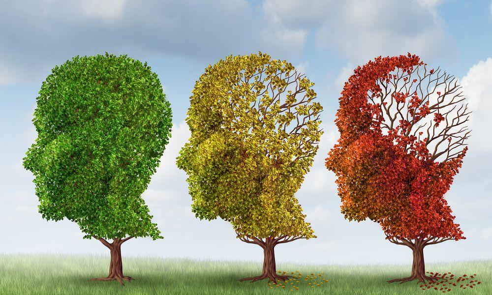 Ученые впервые идентифицировали участки мозга, наиболее уязвимые к болезни Альцгеймера.Вокруг Света. Украина