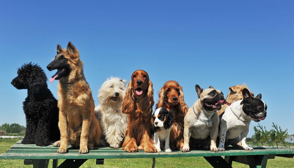 Умный ошейник сообщает владельцам, что чувствует их собака.Вокруг Света. Украина