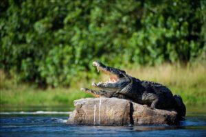 Почему крокодилы не изменились со времен динозавров