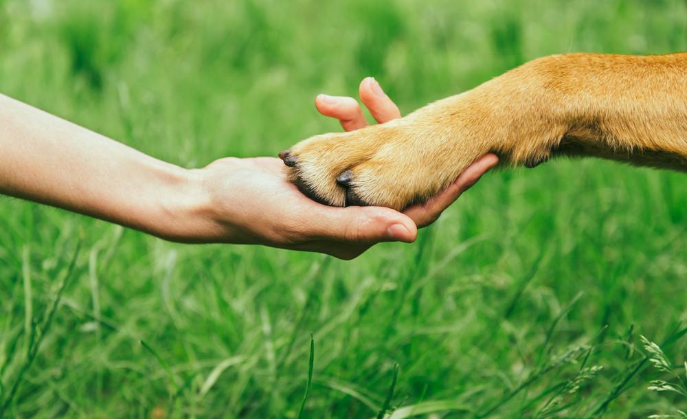 Собак приручили женщины
