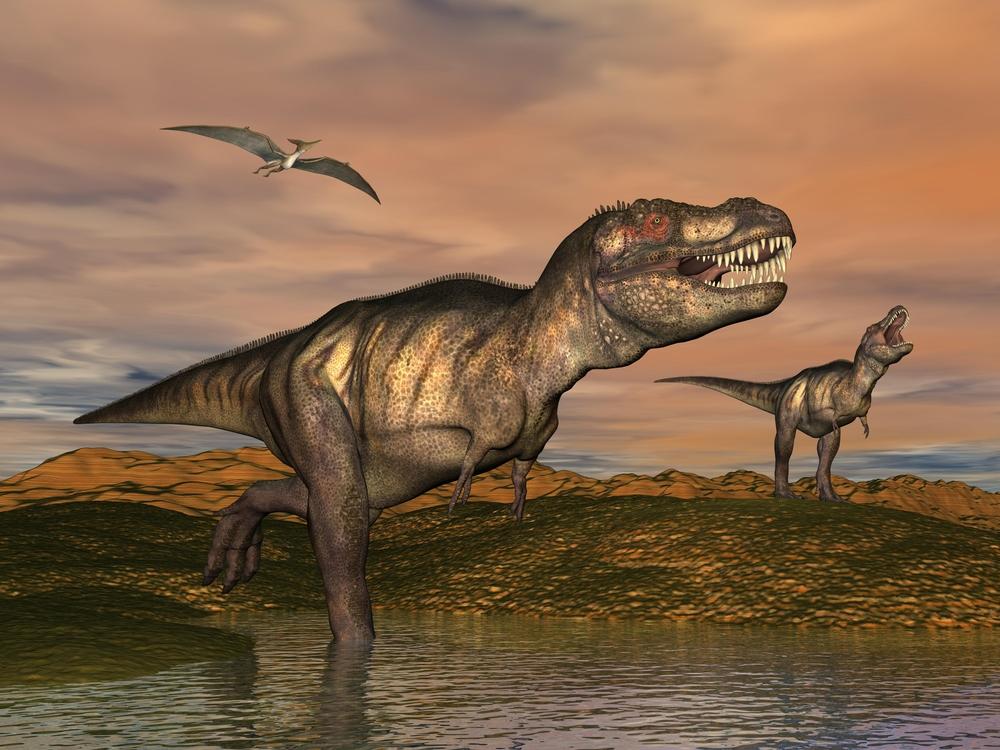 Детеныши тираннозавров размером с собаку уже охотились самостоятельно