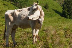 Во Франции признали законными звуки и запахи деревни
