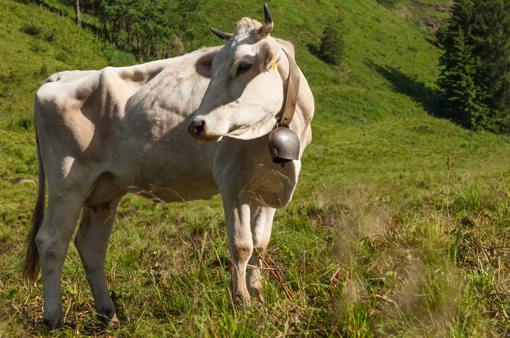 Во Франции признали законными звуки и запахи деревни.Вокруг Света. Украина