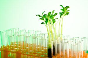В США предлагают выращивать древесину в пробирке