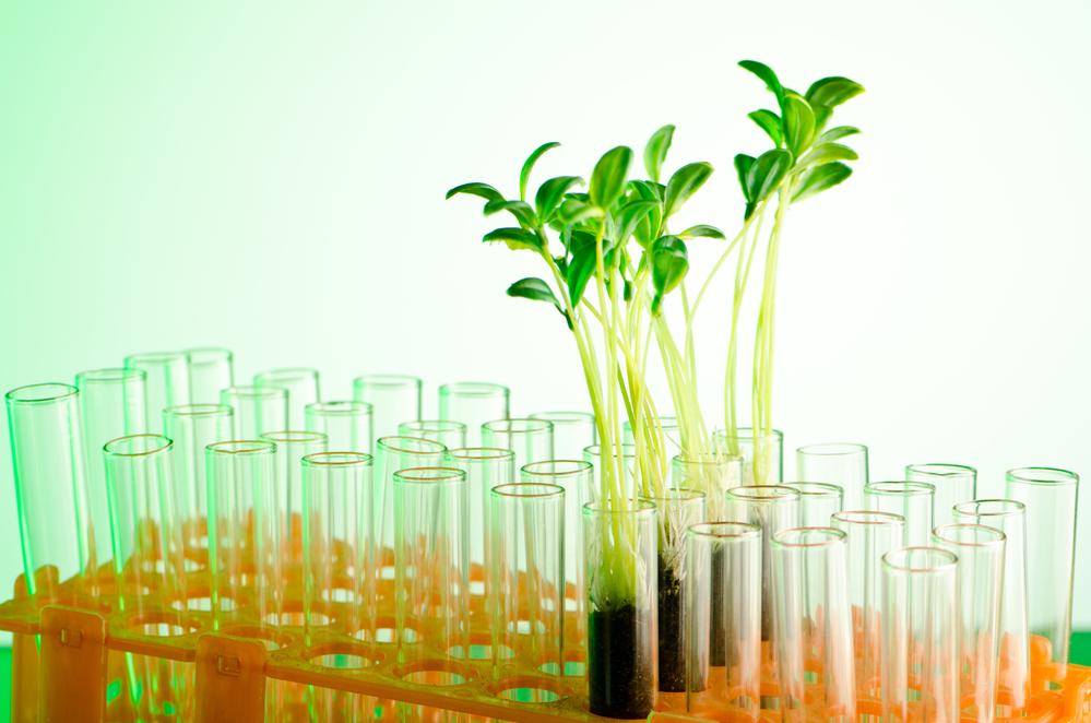 В США предлагают выращивать древесину в пробирке.Вокруг Света. Украина