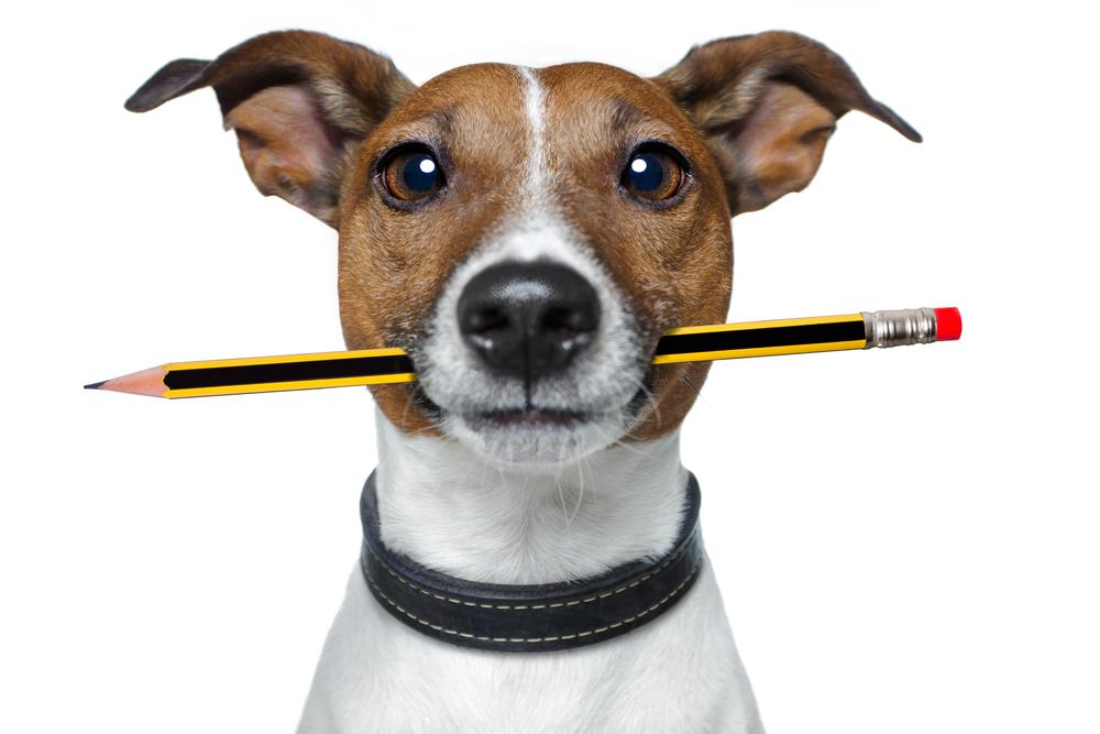 Собаки запоминают слова так же быстро, как дети.Вокруг Света. Украина