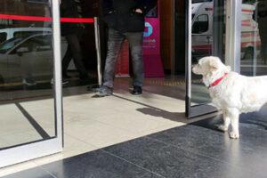 В Турции собака 6 дней ждала под больницей хозяина