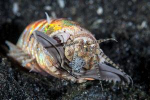 Обнаружен ископаемый двухметровый червь – предок современных червей-боббитов