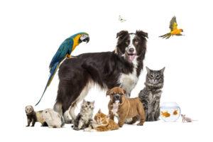 Как видят животные? Очень по-разному, с разной силой зрения и в разных цветах