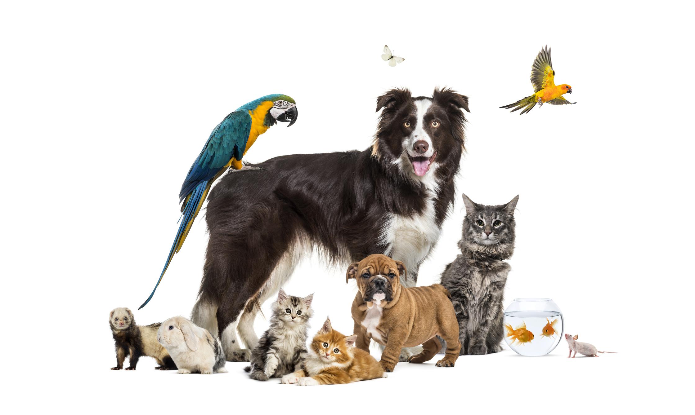 Как видят животные? Очень по-разному, с разной силой зрения и в разных цветах.Вокруг Света. Украина