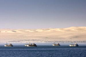 Простая замена рыболовных снастей спасла тысячи птиц в Намибии
