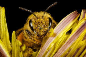Пестициды не дают пчелам уснуть