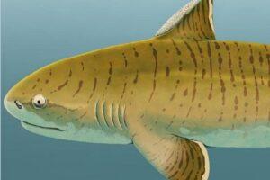 Найден единственный в мире скелет древней акулы