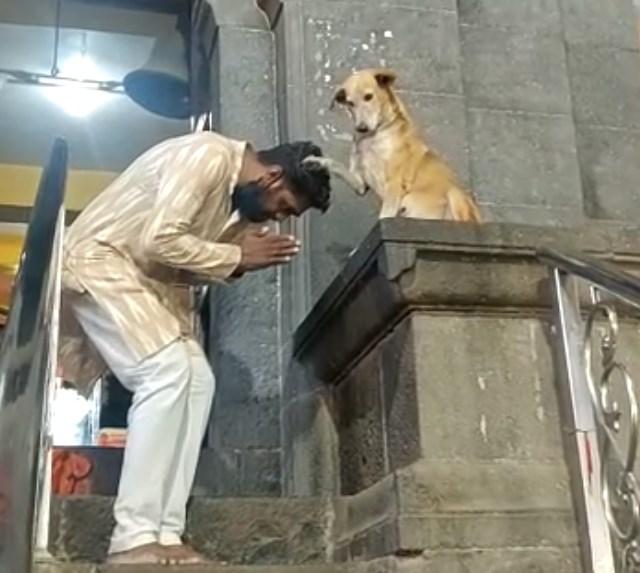 В Индии собака благословляет верующих у храма.Вокруг Света. Украина