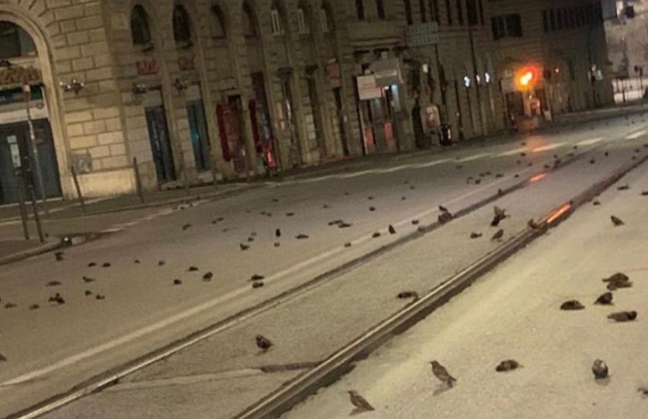 В Риме сотни птиц погибли из-за новогодних салютов.Вокруг Света. Украина