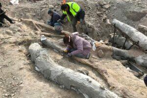 На острове Лесбос нашли окаменелое дерево возрастом 20 млн лет