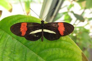 Ревность у бабочек: чтобы не досталась больше никому