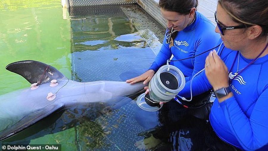 Почему дельфины страдают от декомпрессии только по вине человека