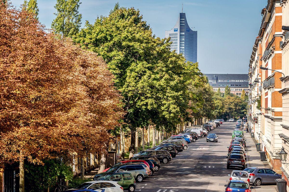 Городские деревья социализируют, примиряют и лечат депрессию