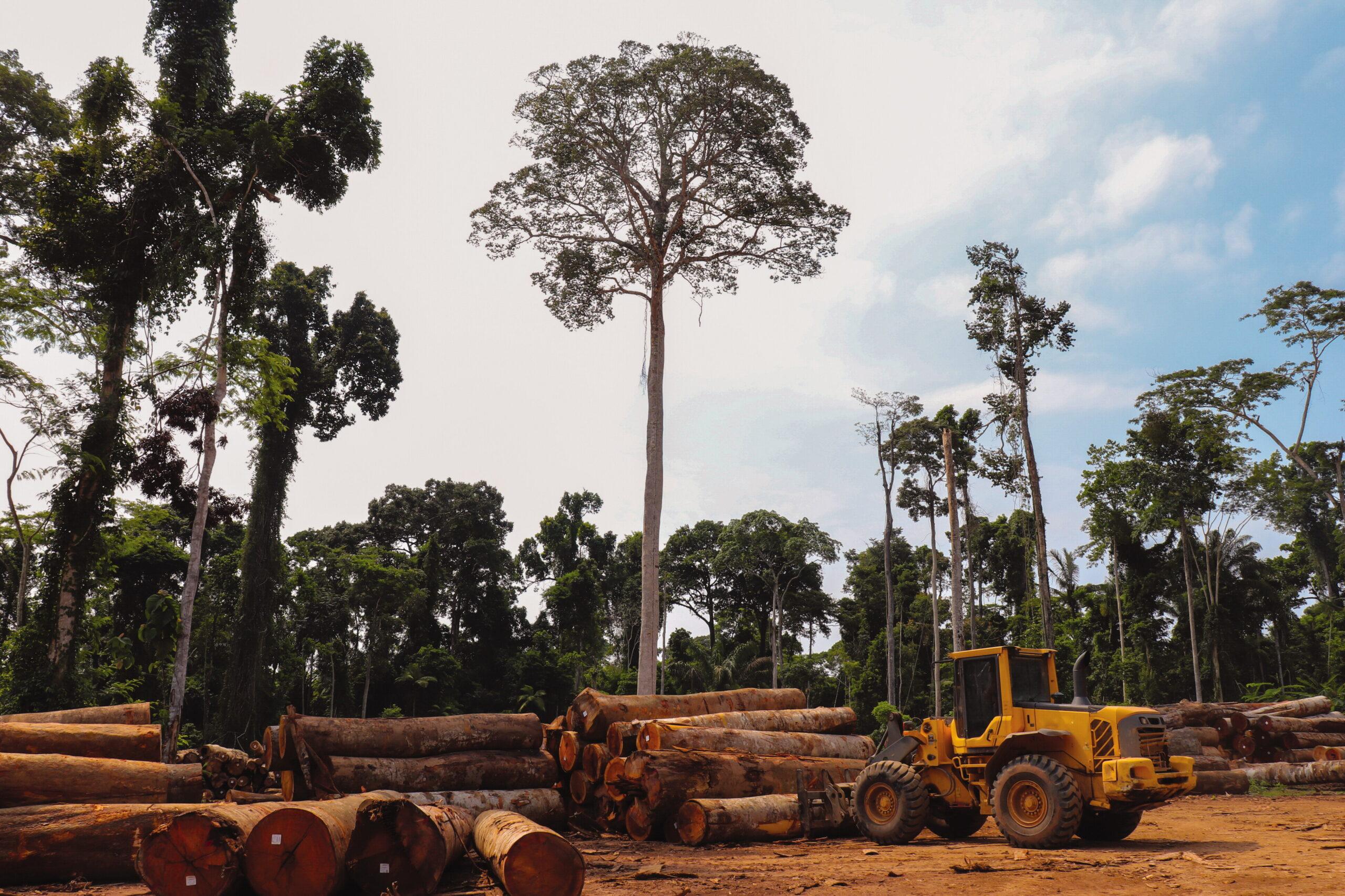 После 2064 года леса Амазонии уже невозможно будет восстановить.Вокруг Света. Украина