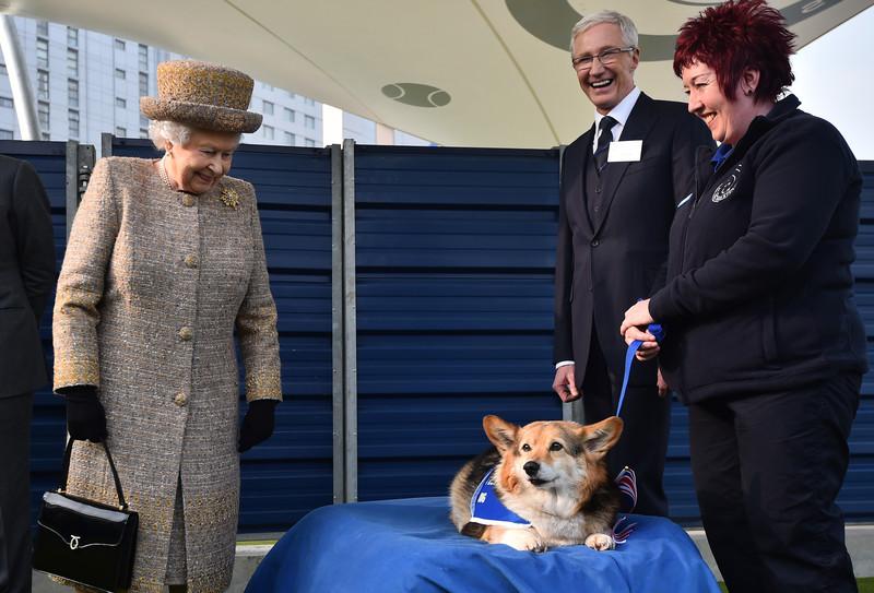 Королевские корги: все о собаках Елизаветы II.Вокруг Света. Украина