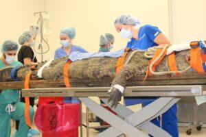 В США крокодил попал в операционную из-за кроссовка