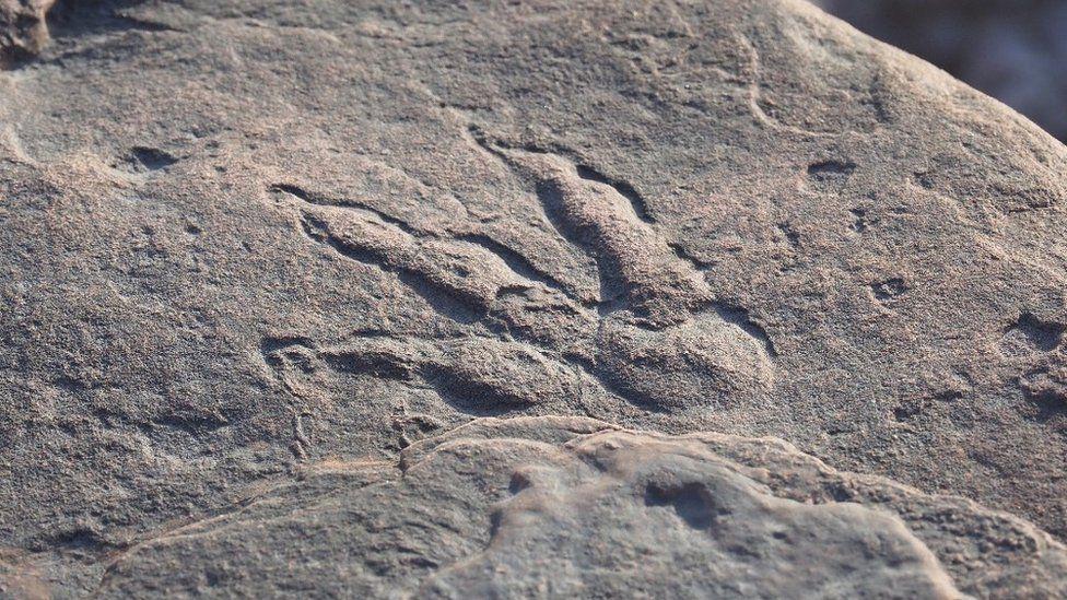 Четырехлетняя британка нашла на пляже след динозавра.Вокруг Света. Украина