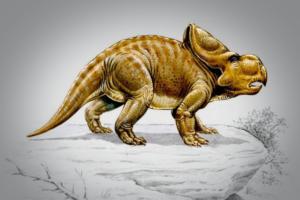 Зачем протоцератопсу оборка на шее?