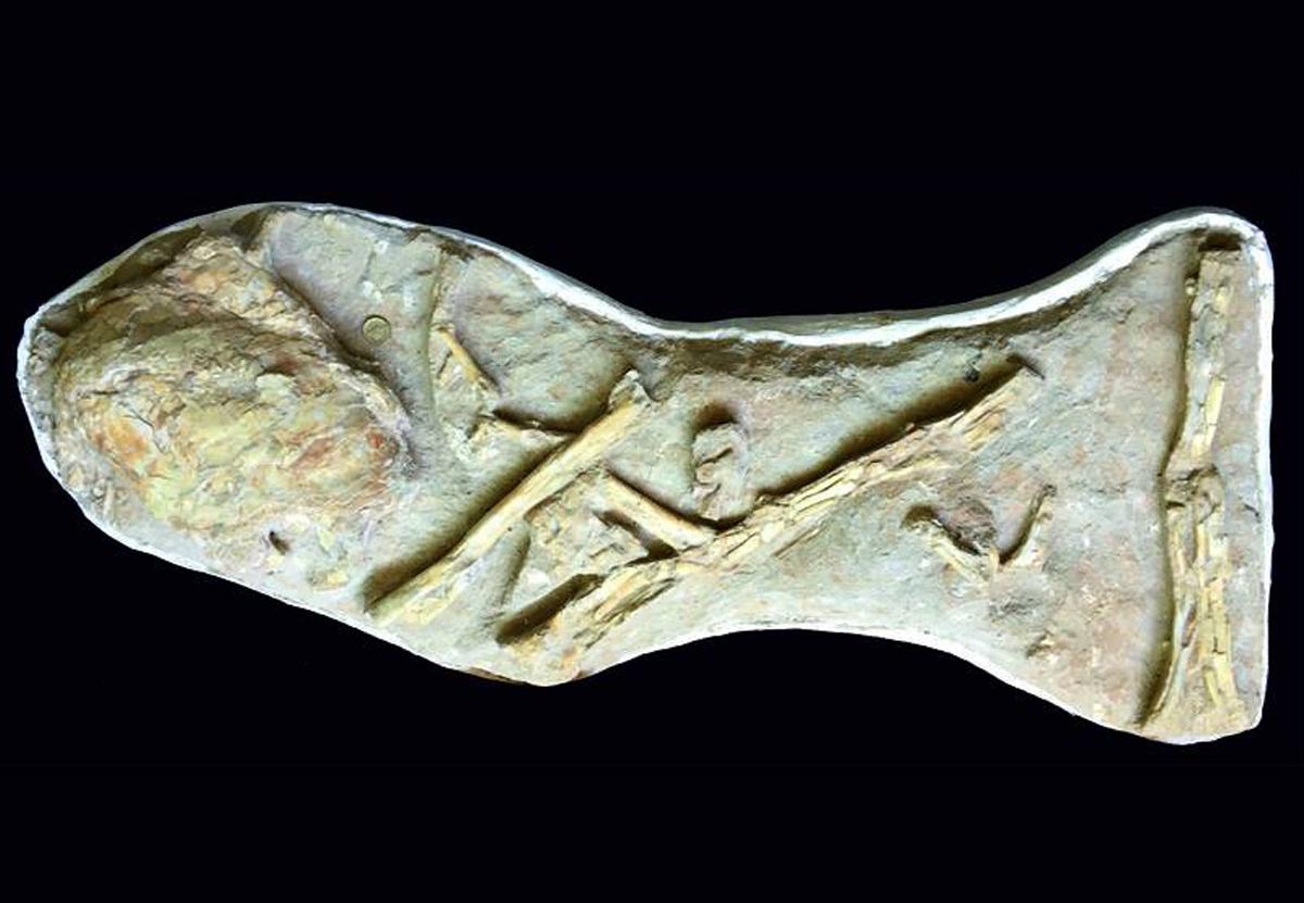 Останки гигантской рыбы ошибочно считали черепом птеродактиля