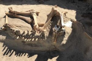 Дикая кобыла из ледникового периода оказалась обычной домашней лошадью
