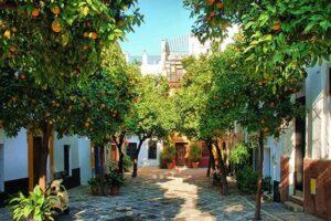 В Севилье апельсины превратят в чистую энергию