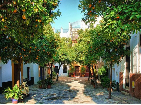 В Севилье апельсины превратят в чистую энергию.Вокруг Света. Украина