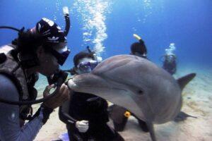Любопытные и общительные: исследователи узнали, чем дельфины похожи на людей