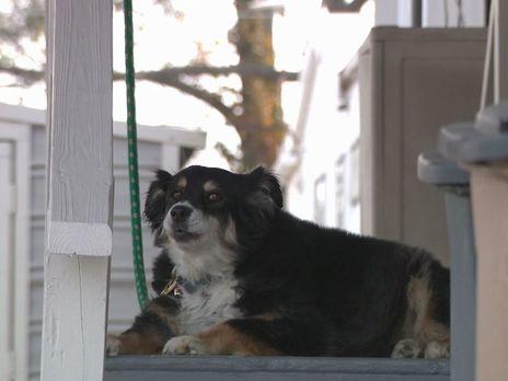 В США миллионер оставил все наследство собаке