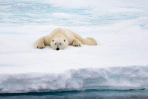 В крови арктических животных нашли следы антидепрессантов