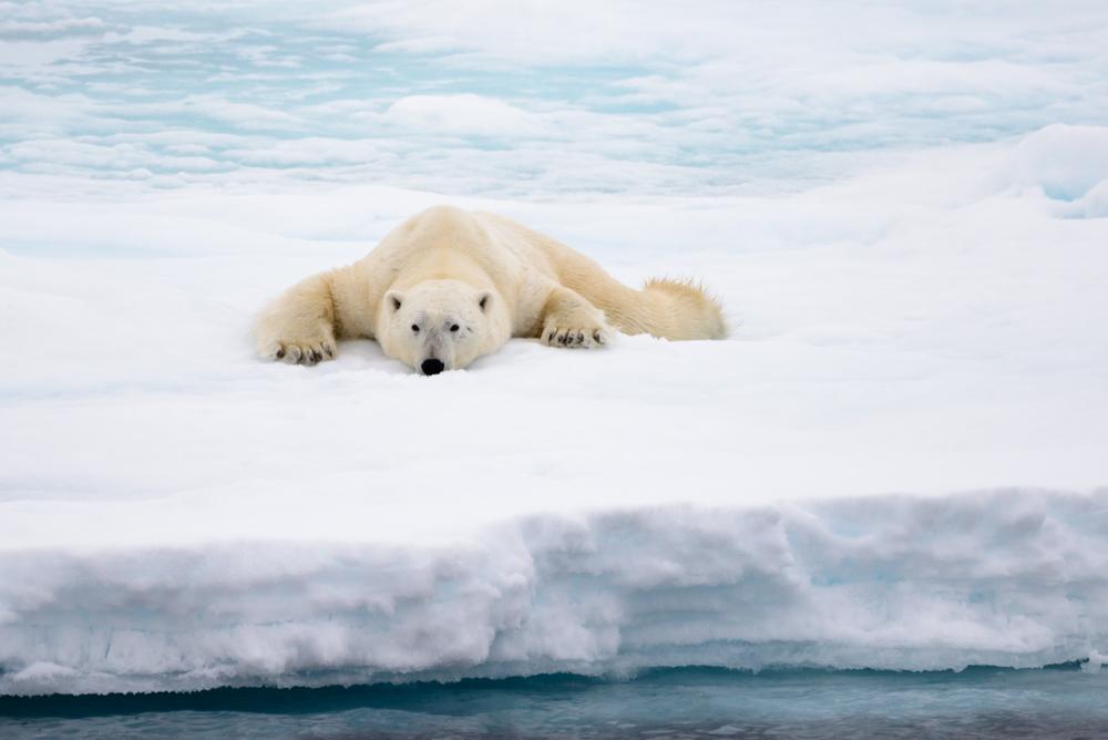 В крови арктических животных нашли следы антидепрессантов.Вокруг Света. Украина