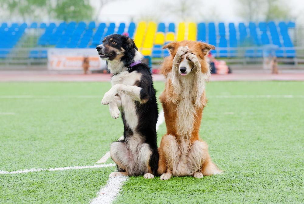 Собаки умеют «играть на публику».Вокруг Света. Украина