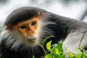 В Китае алгоритм будет вычислять редких обезьян по