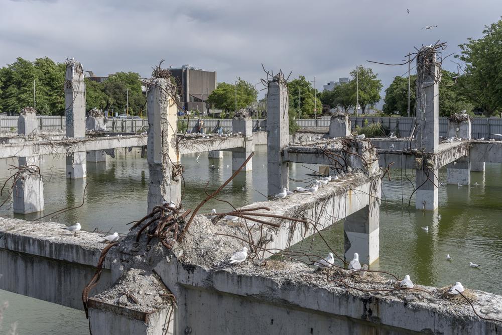 В Новой Зеландии из-за чаек остановили строительство собора.Вокруг Света. Украина