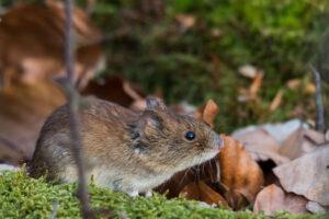 Городские мыши умнее деревенских