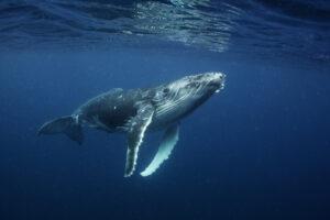 Антропогенный шум вредит всем морским обитателям
