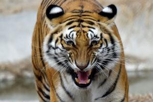 10 редких видов, которые удалось спасти от исчезновения
