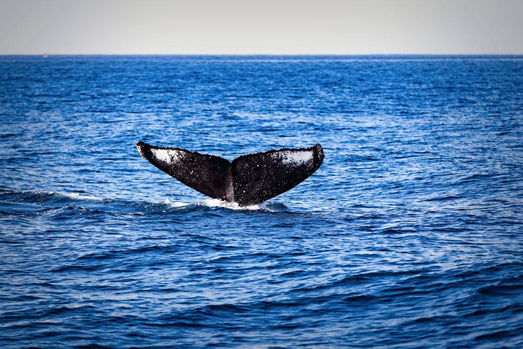 Почему киты и дельфины не болеют раком