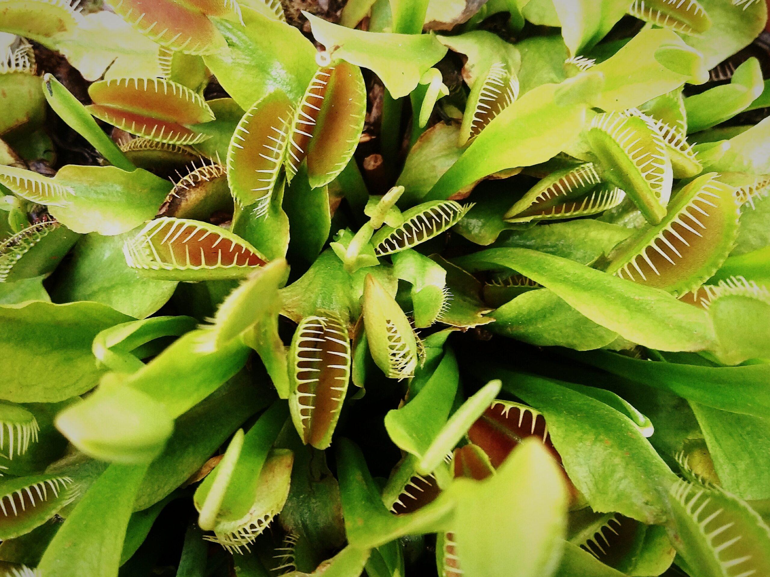 Хищное растение генерирует магнитное поле, когда ловит насекомых